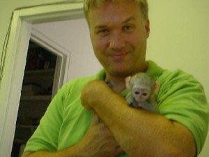 Gorgeous Capuchin Monkey Babies For Sale - Belfast - free